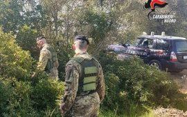 Talana, tra la vegetazione i carabinieri trovano un fucile clandestino