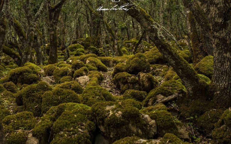 Le foto dei lettori. Verde, magia e mistero a Gairo