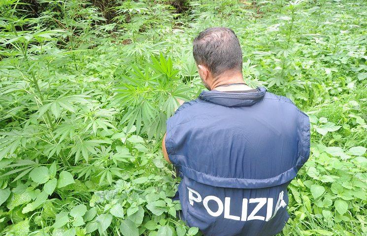Terza piantagione trovata dalla Polizia nel giro di un mese: un altro giovane in manette