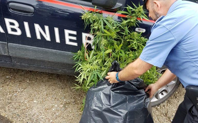 Coltivava la droga in casa, arrestato un 22enne di Tertenia colto sul fatto