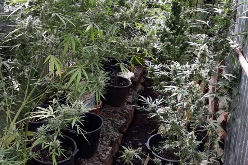 Gairo, arrestato un 44enne per coltivazione e spaccio di droga, colto sul fatto