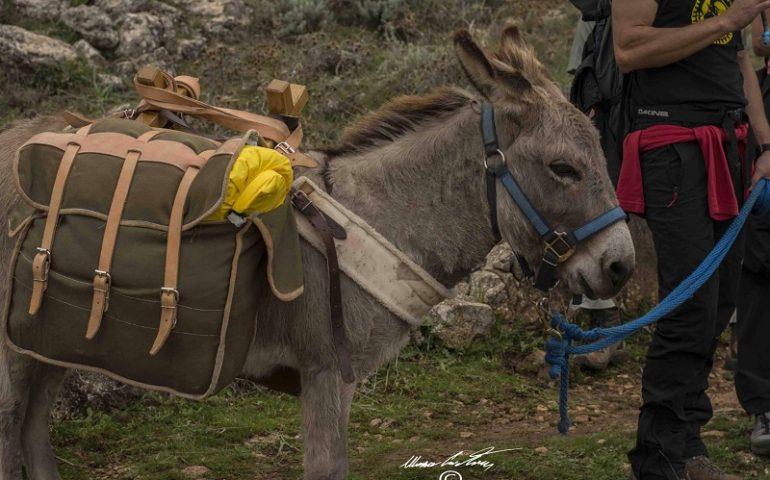 Un tour tra i tacchi d'Ogliastra in compagnia degli asinelli