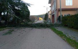 Maltempo Ogliastra. Il vento abbatte una grossa pianta a Villanova