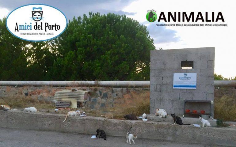 """Tortolì, senza permesso portano via i gattini della colonia """"Amici del Porto di Arbatax"""": la rabbia dell'associazione Animalia"""