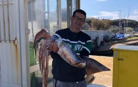 Arbatax, totano di oltre 7 kg pescato in porto