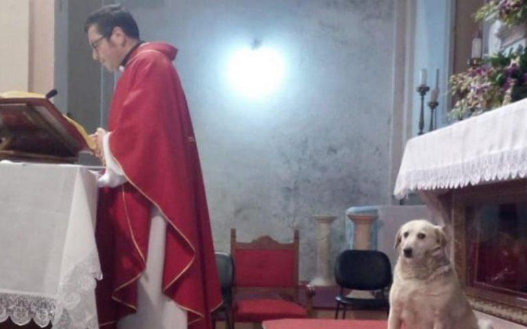 """Lady, il cane chierichetto """"adottato"""" dal parroco che partecipa a tutte le messe"""