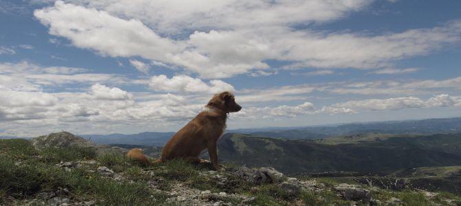 Trentino. Ventiseienne precipita da un dirupo e muore: il cane la veglia per ore