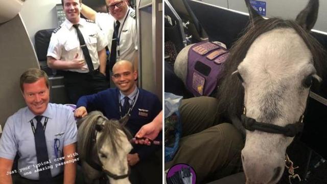 Sale in aereo con Flirty, il suo pony. La compagnia aerea lo permette: è un animale da supporto emotivo