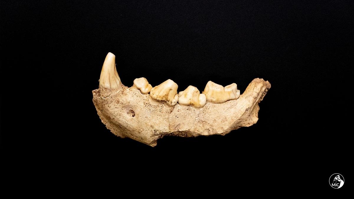 neanderthal-circeo-scoperta (3)