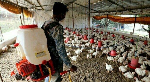 Influenza aviaria H10N3: primo caso di contagio umano rilevato in Cina