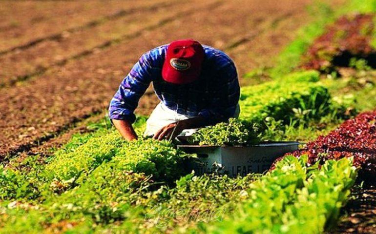 Brindisi: Camara, 27 anni, dopo una giornata di lavoro sui campi con 40 gradi, muore mentre torna a casa