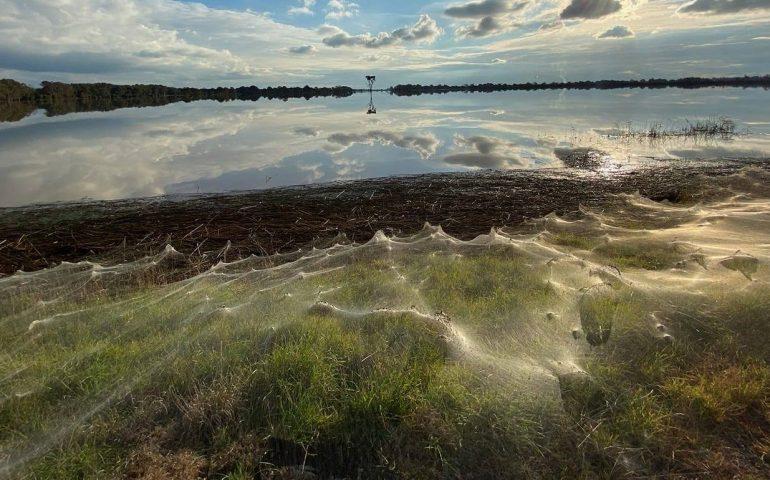 """Chilometri di ragnatele in Australia ricoprono ogni cosa: ma c'è un motivo e si chiama """"ballooning"""""""