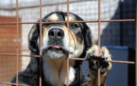 adottare-un-cane-dal-canile-e1470814963945