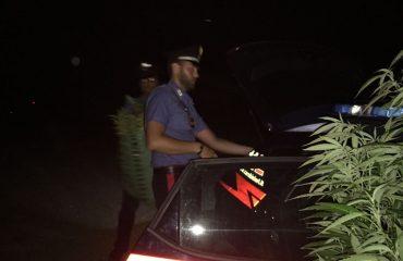 Carabinieri Marijuana Villacidro