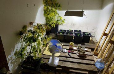 assemini piantagione di marijuana (1)