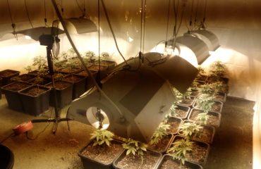 Droga marijuana spacciatori (2)