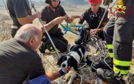 Serrenti: i Vigili del Fuoco salvano un cagnolino